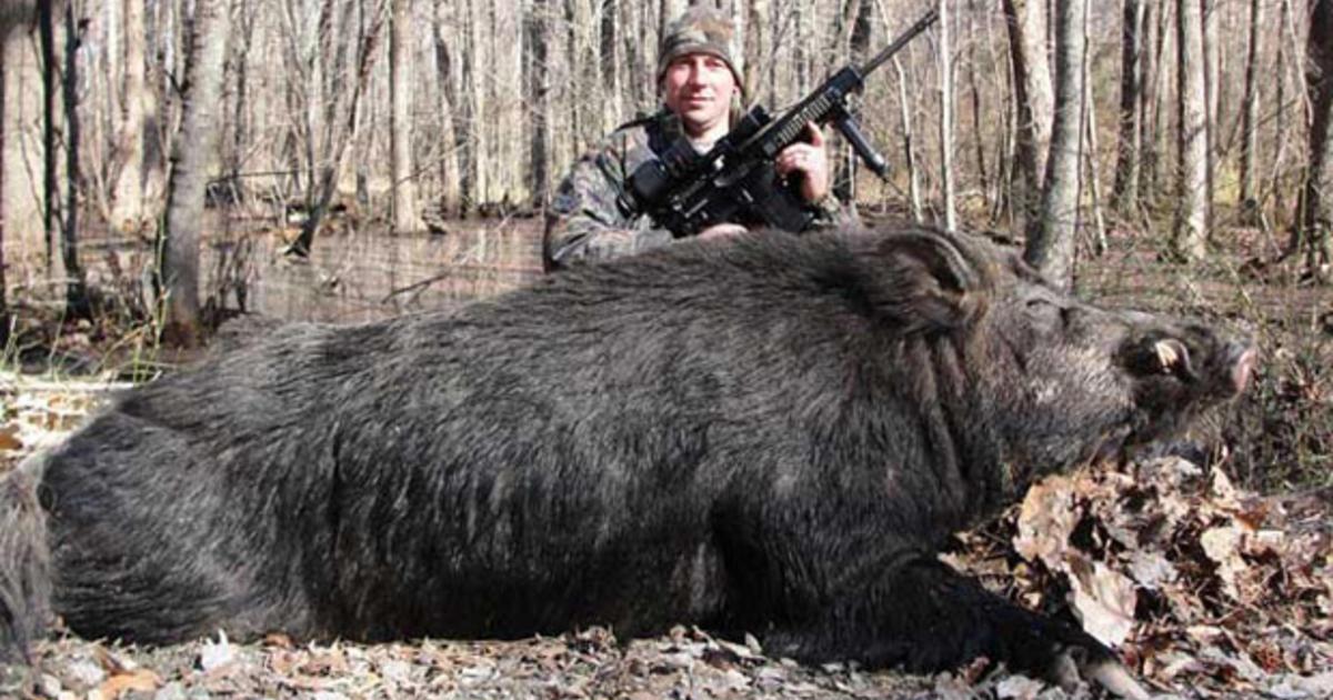 nc hunter shoots kills 500 lb 8 ft wild hog