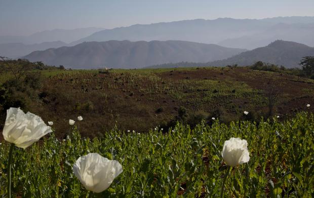 Burma's opium problem
