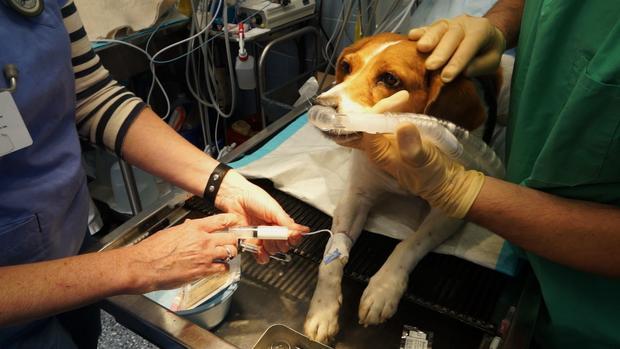 dog-dental-anesthesia.jpg