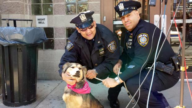 metro-north-dog-rescuers.jpg