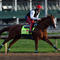 kentucky-derby-california-chrome-487630861.jpg