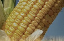 GMO labeling bills face opposition from manufacturers
