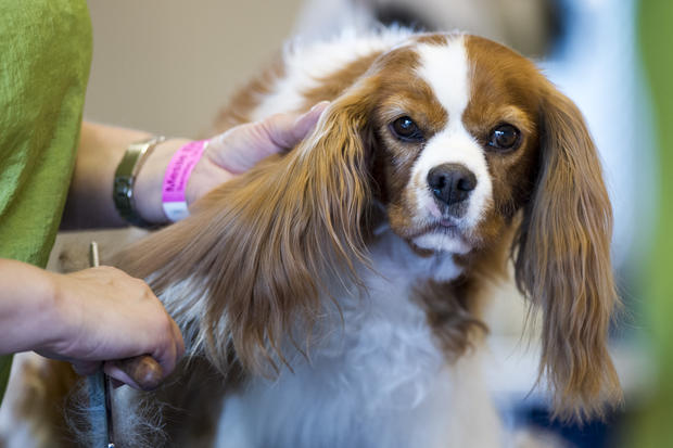 International dog grooming championships
