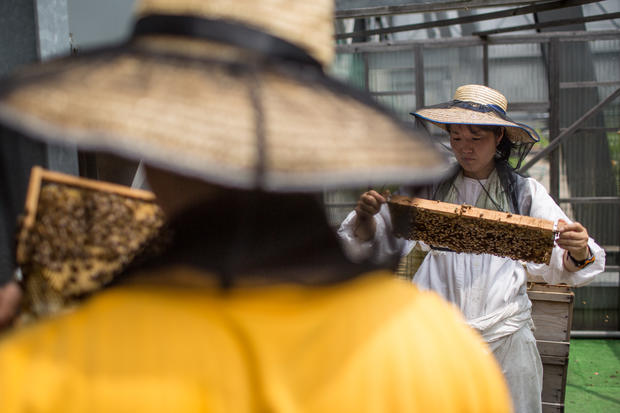 Rooftop bee hives of the Ginza Honey Bee Project