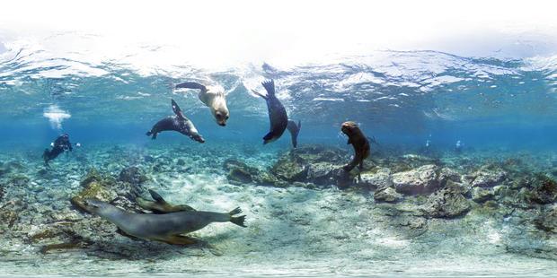 galapagos-islands-ecuador-sealions.jpg