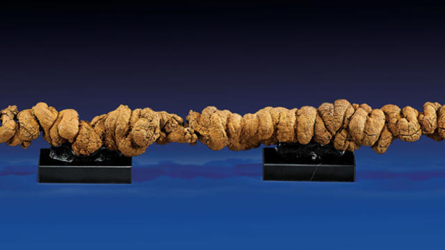 fossilized-poopcropped620x350.jpg