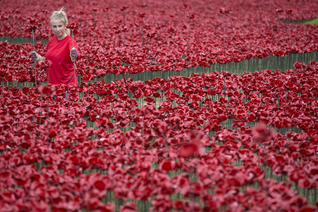 Sea of poppies at the Tower