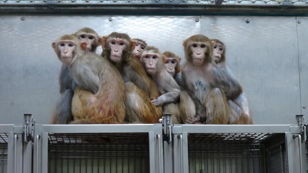 Inside an NIH primate lab