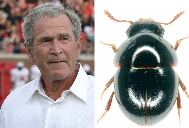 George W. Bush - Celebrity species - Pictures - CBS News