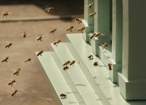 bees82041216.jpg