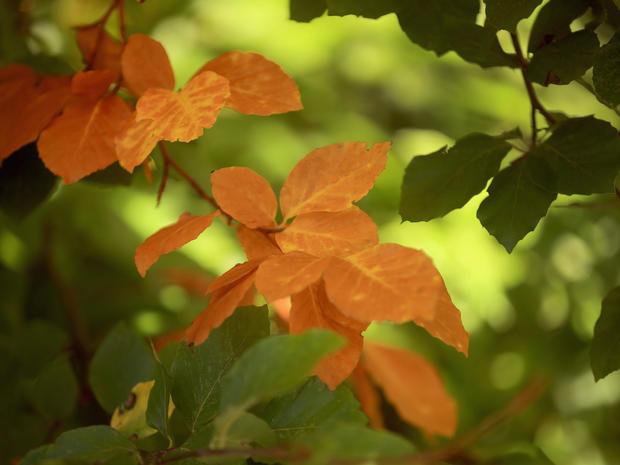 Fall foliage 2014