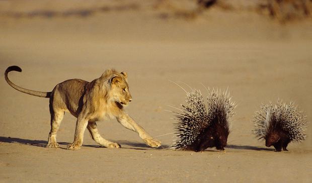 2014's top wildlife shots