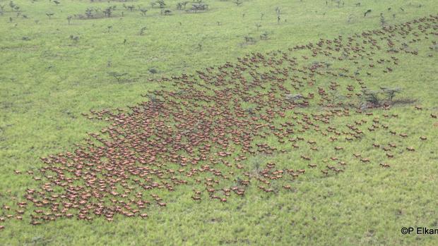 South Sudan war puts wildlife in danger