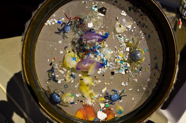 sample-of-plastics-from-s-atlantic-gyre-judy-lemmon.jpg