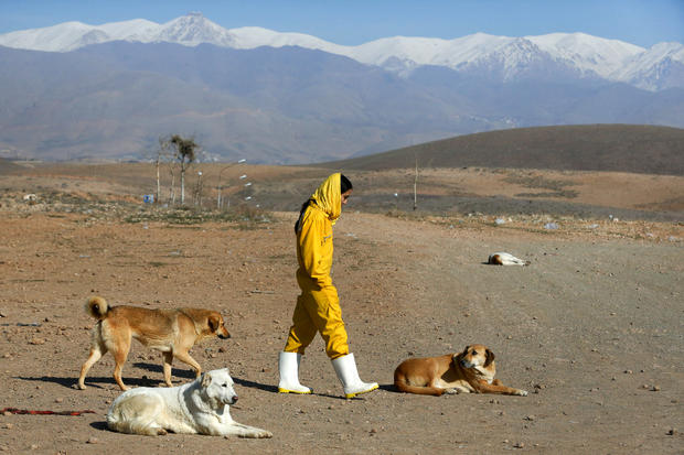 Iran's only dog shelter struggles to provide for canines