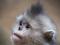 snub-nosed-monkeys-jacky-poon-2828.jpg