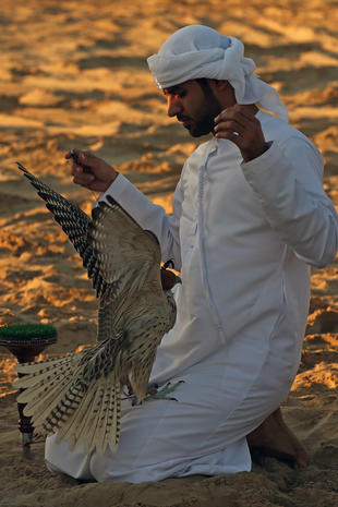 Falconing for sport