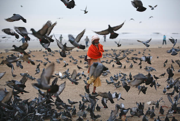 A Hindu holy man asks for alms as he walks among birds flying at a beach along the Arabian Sea in Mumbai, India, Feb. 11, 2015.