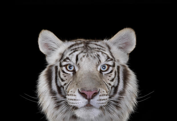 Staring contest: Uncanny animal portraits