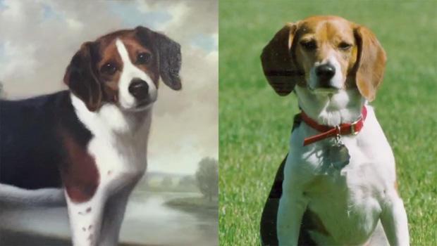 ralph-betty-beagles-b-620.jpg