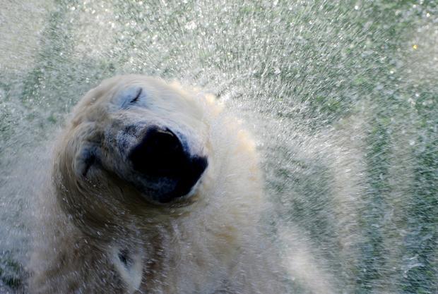 polar-bears24getty.jpg