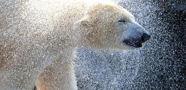 polar-bears08getty.jpg