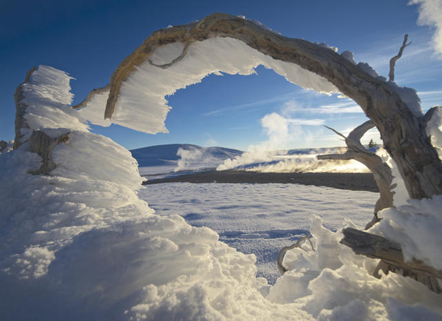 Winter In Yellowstone Pictures Cbs News