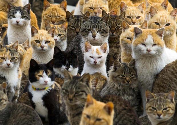 Japan's Cat Island