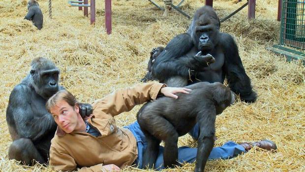 gorillasmain.jpg