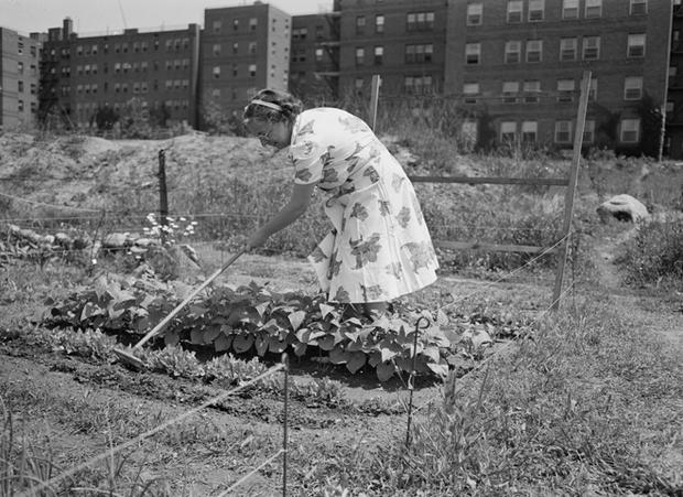 new york city propaganda art for wwii victory gardens pictures cbs news - The Victory Garden