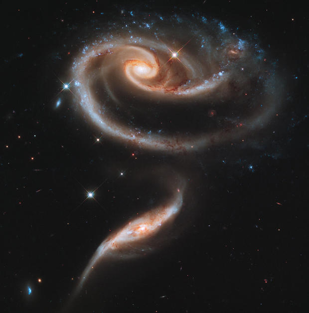 galacticrose.jpg