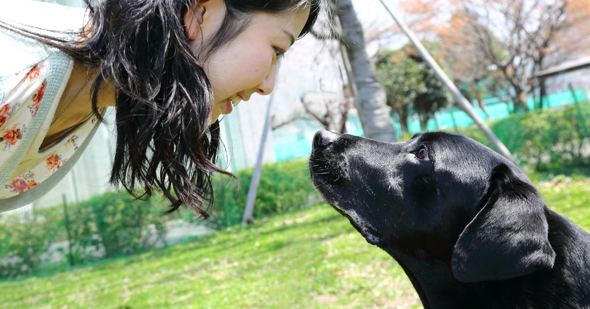 Image result for making eye contact with a dog