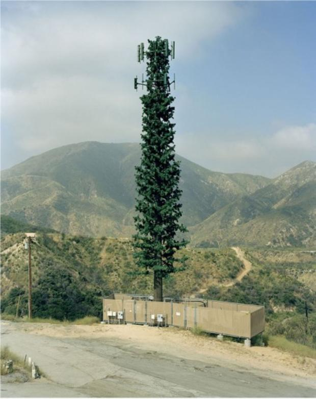 robert-voitnew-treescity-436x550.jpg