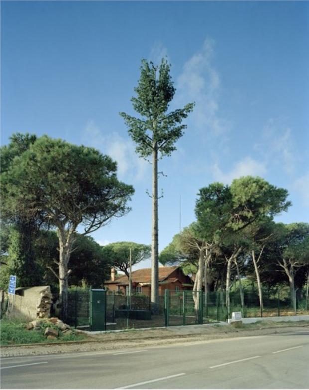 robert-voitnew-treesbirre-436x550.jpg