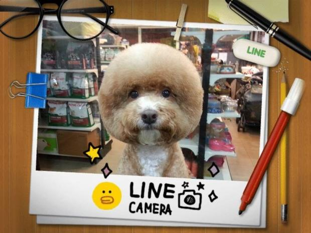 Dogs in Taiwan upping their #selfie game