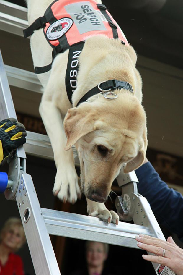 riley-down-ladder-4-lo-sy-event-6-11-barnes.jpg