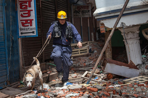 Hero dogs of Nepal