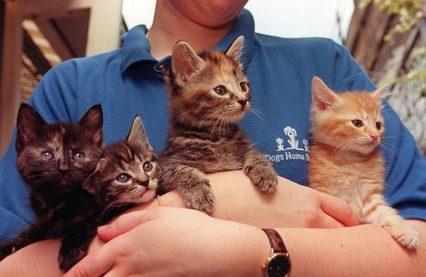kittens52013834.jpg