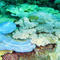 bleached-table-acroporids-acropora-cytherea-and-a-tenuis.jpg