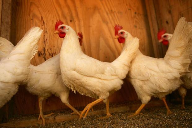 chicken-gettyimages-74003958.jpg