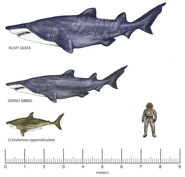 big-shark-620.jpg