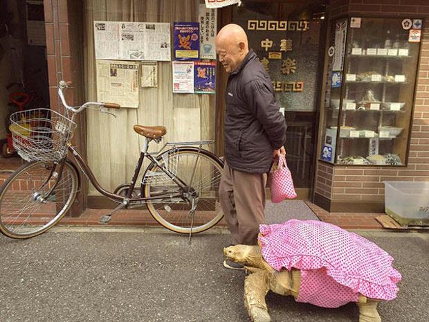 tortoise-in-tokyo.jpg