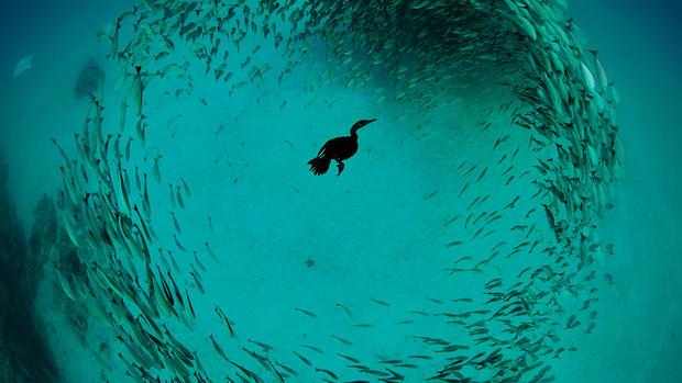 2015 Audubon Photography Awards