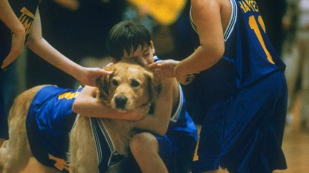 Image result for Air Bud dog