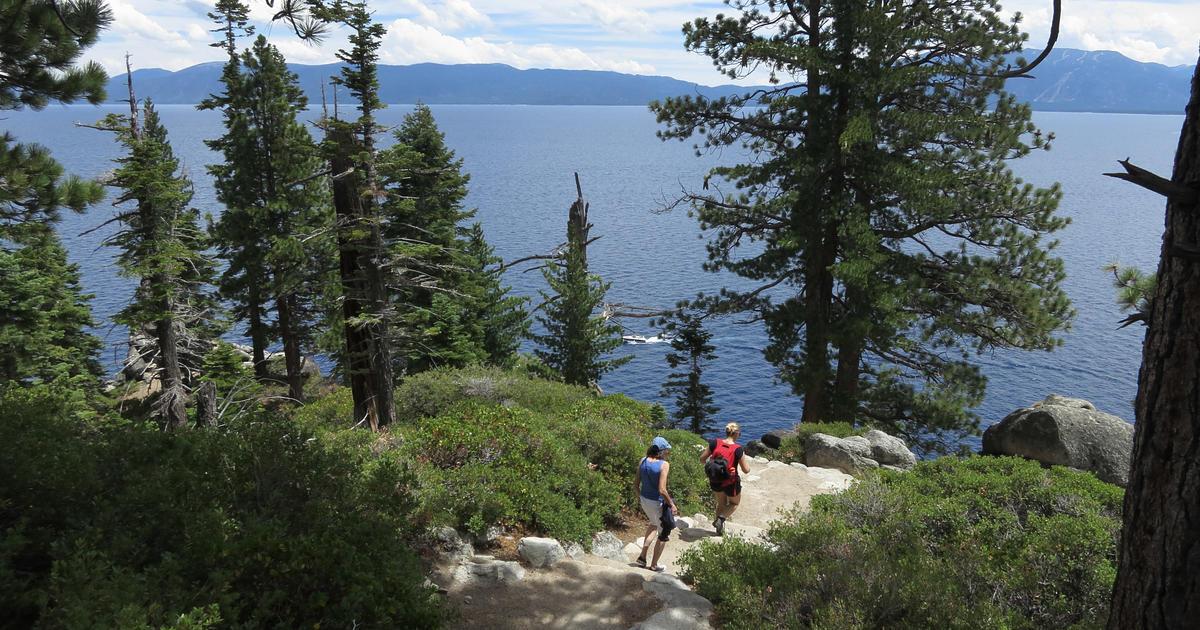 Plague detected in Lake Tahoe area - CBS News