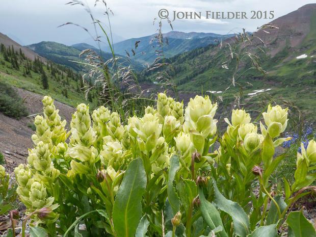 john-fielder-crested-butte-co-2015-11.jpg