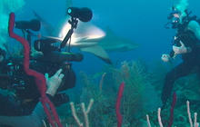 Anderson Cooper: Swimming with sharks