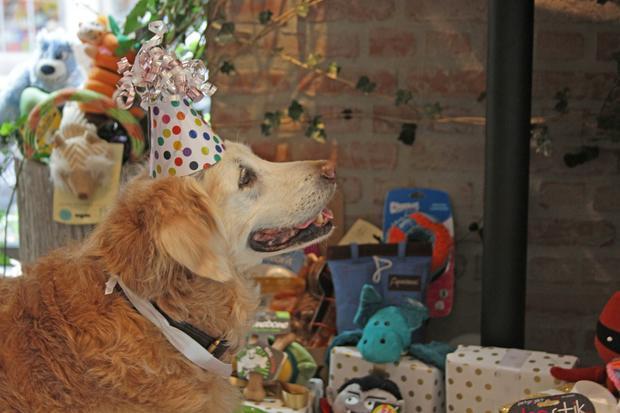 birthday2web.jpg