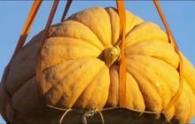 Watch: Giant pumpkins drop in Utah