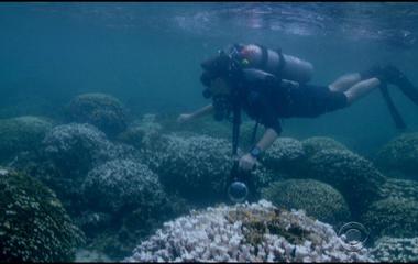 "NOAA warns of global ""coral bleaching"""